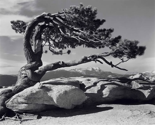 Stolen from the Ansel Adams Gallery.