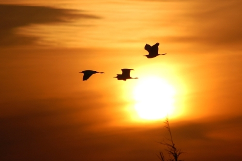 sunset_flight