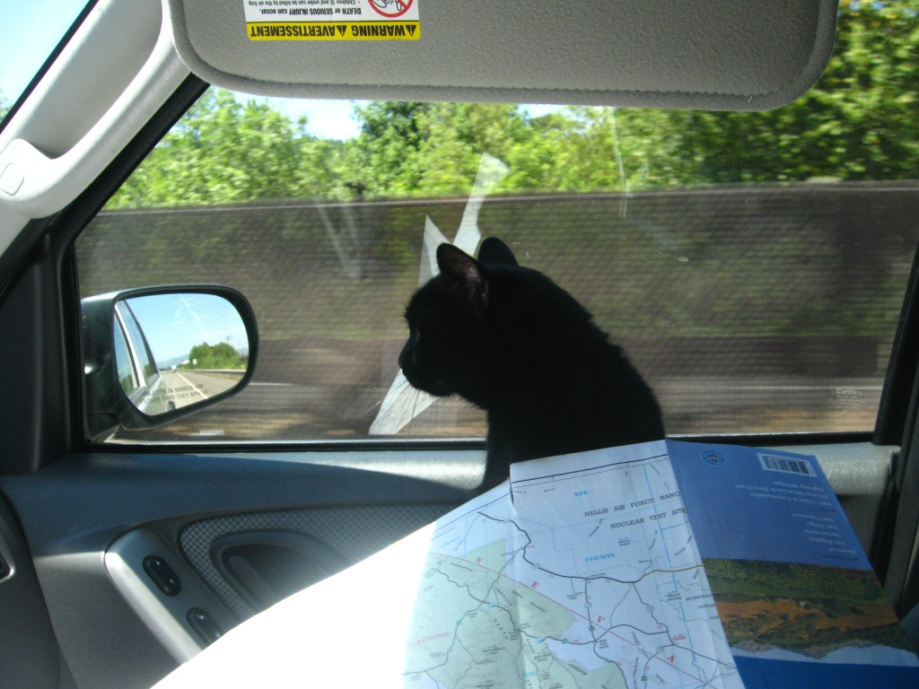 I covered him with my road map to keep the sun off his back. He figured out how to open the window. Maybe he just wanted to stick his head outside like a dog, but I locked it to be safe.