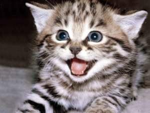 help me kitten